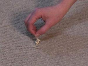 Gum-From-Carpet