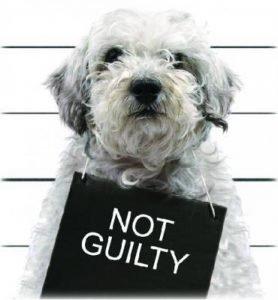 Pat-Not-Guilty
