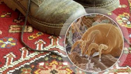 Understanding and Removing the Allergens in Your Area Rugs