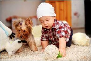 carpet-baby-dog