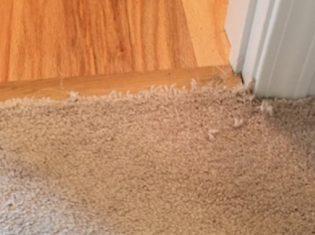 Pet-Damage-Carpet-Repair-Before