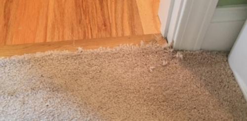 Pet Damage Carpet Repair Before